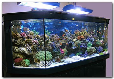 photo d 233 coration pour aquarium eau douce