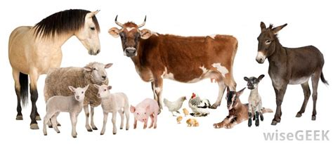 imagenes de animales transgenicos what is animal husbandry with pictures