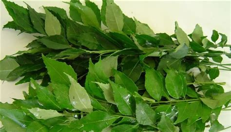 Leaves To Get Teeth Whitened by 13 Ways To Whiten Teeth Naturally Abc Dental