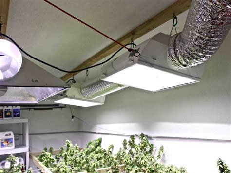 indoor marijuana grow lights get yourself the best marijuana grow lights