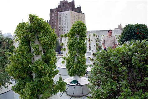 Vertical Garden Nyc Rooftop Hydroponic Garden Nyc Thecoolist The Modern