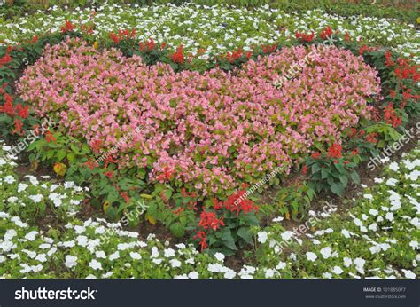 a shaped garden flower a shaped pink flowers in the garden stock photo
