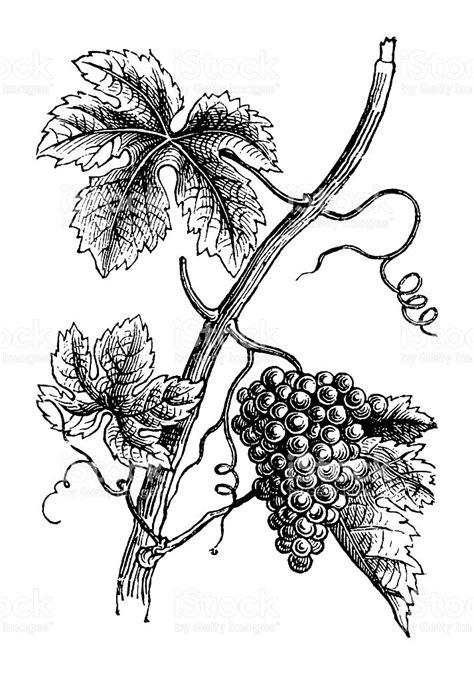 clipart uva grappolo d uva clipart 30