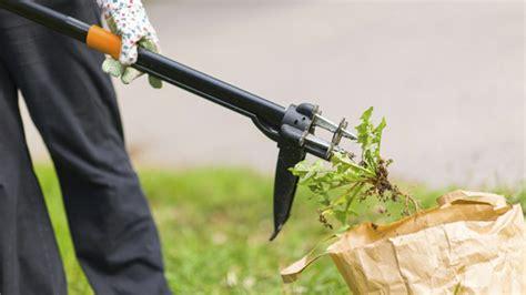 Unkraut Vernichten Essig 5923 by Unkraut Vernichten Ohne Giftige Stoffe Die Besten Methoden