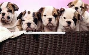 Tags puppy cute puppies baby dog pets