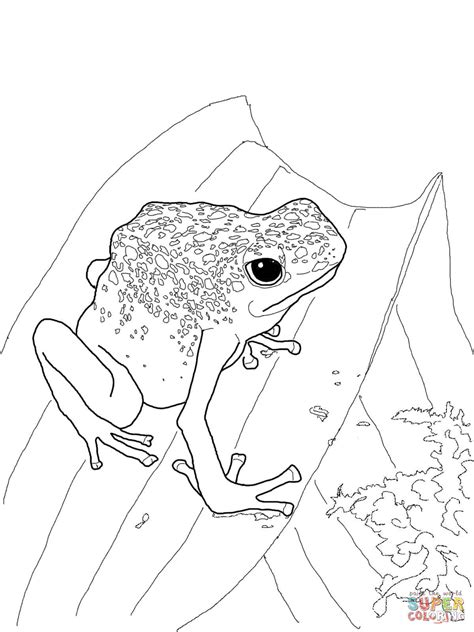 poison dart frog coloring page coloring home