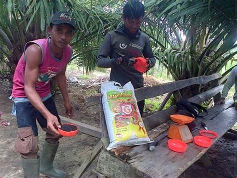 Pupuk Boron 48 pupuk kelapa sawit archives budidaya kelapa sawit