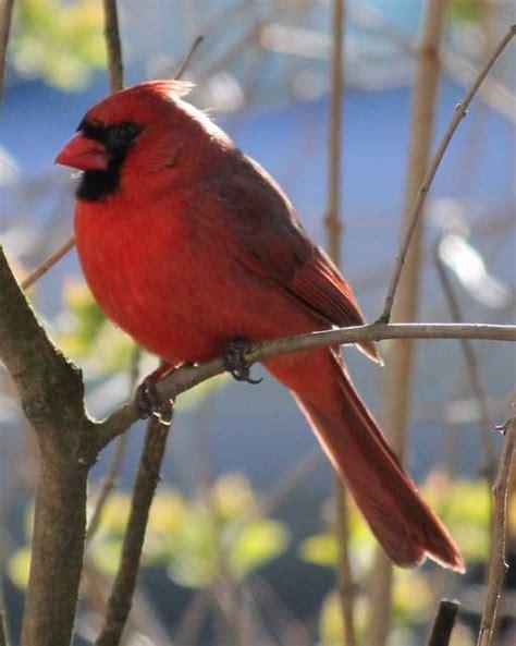backyard bird watch 17 best images about our backyard birds on pinterest