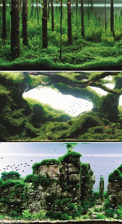 aquascape forest aquascaping aquarium and the forest on pinterest