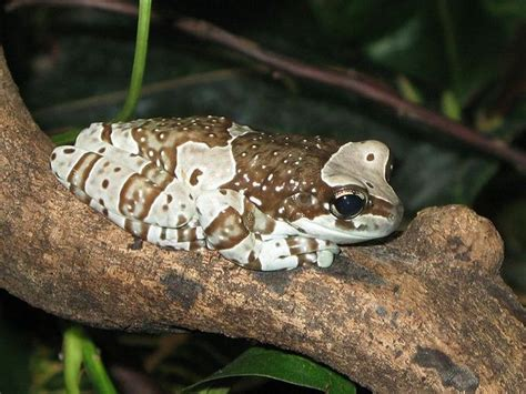 are frogs poisonous to dogs what type of poison is in the poisonous hairs of a caterpillar gt gt tx lizards poisonous