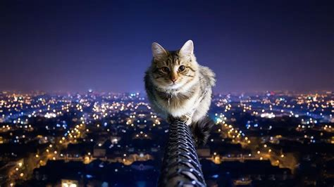 awesome wallpaper of cat cool cat backgrounds wallpaper cave