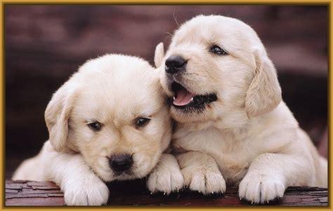 imagenes de perritos imagenes perritos tiernos pictures to pin on pinterest