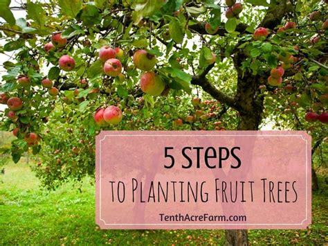 planting fruit trees in backyard 5 steps to planting fruit trees tenth acre farm