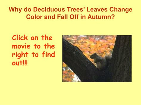 why do trees change color ppt fifth graders fall for leaves every year in