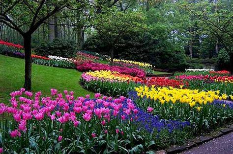 imagenes de jardines con gramineas 20 trucos para mantener tu jard 237 n saludable en el verano
