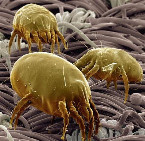 matratze milben milbenkot drei therapiebausteine gegen die