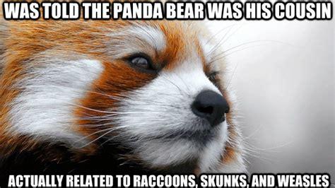Red Panda Meme - red panda meme memes