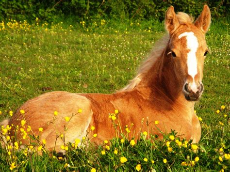 cute horse wallpapers  background pictures