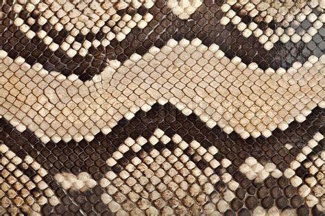 pattern up slang background texture of a skin of a snake close up stock