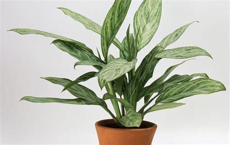 pflanzen indoor 8 indoor plants to buy right now gold coast