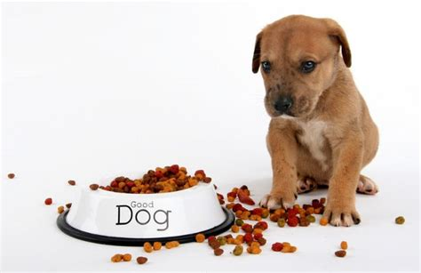 when to start feeding puppies food pin by prolabs pets on puppy