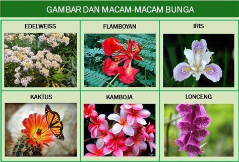 wallpaper bunga inggris info pijat di bekasi pijat gan