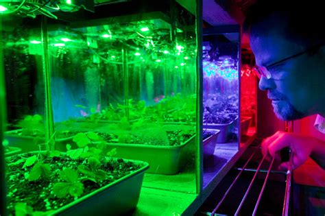 good led grow lights are led lights good for growing vegetables 4k wallpapers