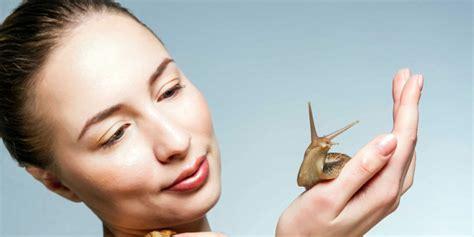manfaat  menganggumkan  manfaat lendir siput