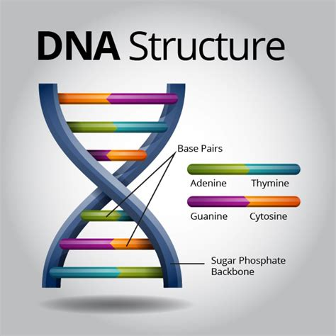 what sections of dna are used in dna fingerprinting dna molecule of life know it all