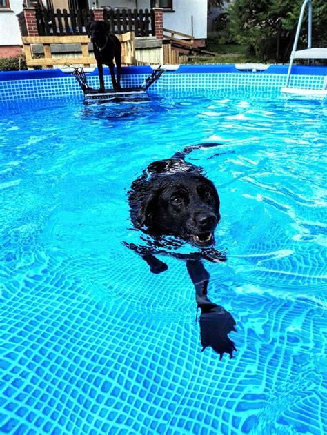swimming pool wannen 13 besten into the swimming pool 2017 bilder auf