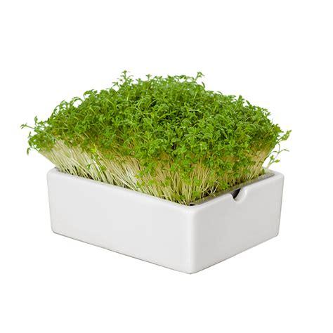 Starter Kit Microgreens microgreens starter kit heimgart