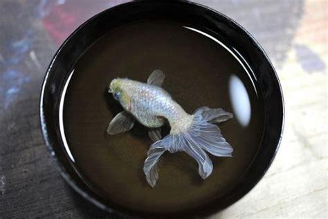 Lukisan Resin 3d hanya lukisan ikan ini terlihat nyata kesenian