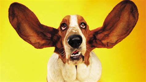 how to a to listen how to listen intelligently act upon it brandwatch