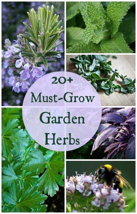 grow an herb garden 187 gardening in the panhandle 20 must grow herbs for your garden if you re planning