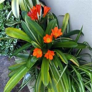 plante vivace 224 feuillage persistant liste ooreka
