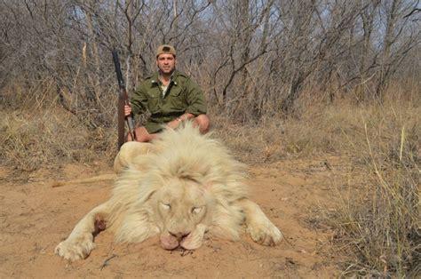 imagenes de leones albinos el le 243 n extreme 241 o de los grandes safaris cr 243 nica el