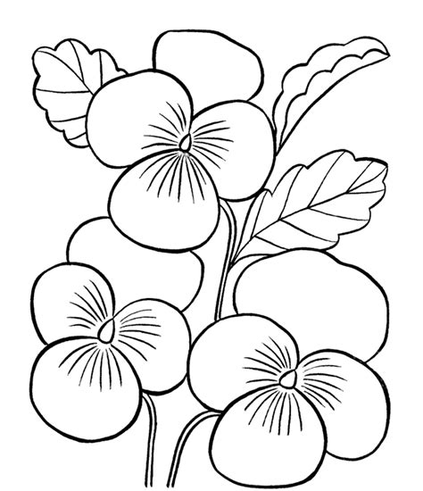plants coloring pages preschool erfly flowers coloring pages for preschool erfly best
