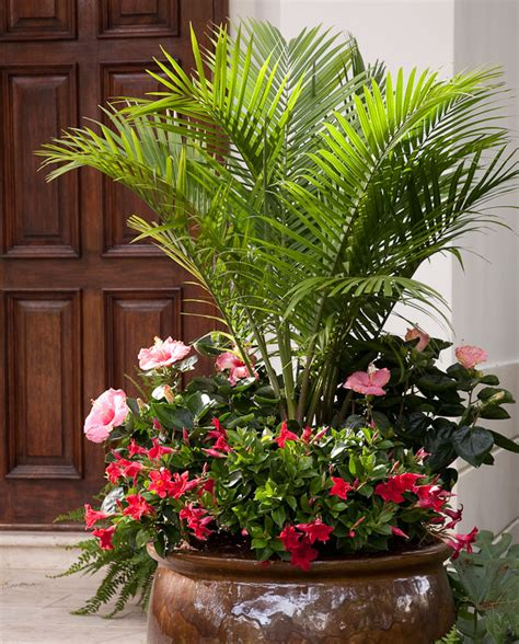 top 10 container gardens for your patio rojabonita