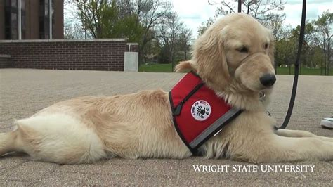 how service dogs are trained service program