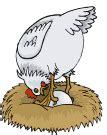 imagenes gif animales im 225 genes animadas de gallos gifs de animales gt gallos