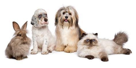 shield  pet pet insurance information news  reviews
