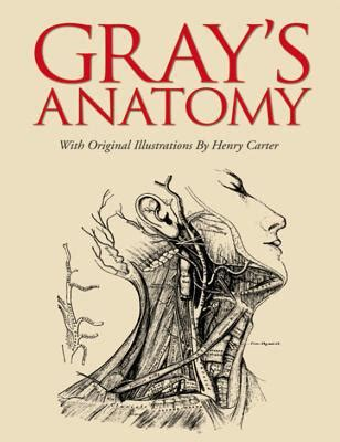 anatomy coloring book books a million gray s anatomy slip edition by henry gray henry