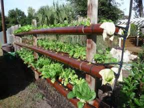 gardening in 4 quot pvc pipe