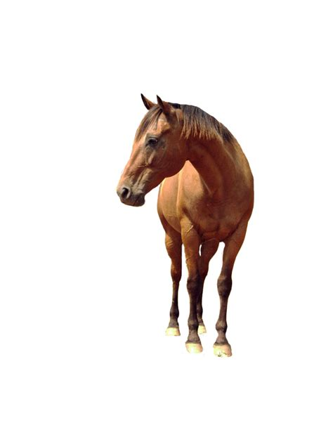 background transparent horse   icons  png