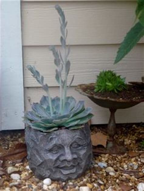 head planter pots for sale 1000 images about plant a hairdo guys on pinterest head
