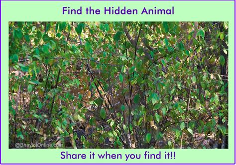 Find In The Picture Riddle Find The Animal In The Photo