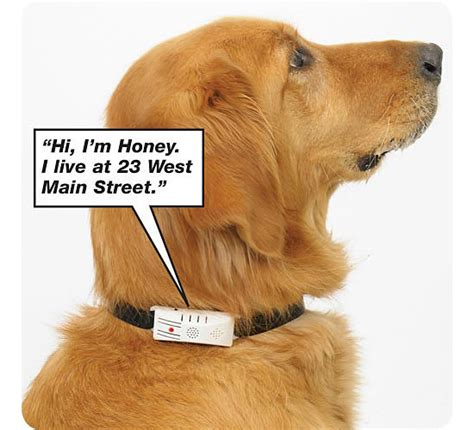 talking puppy talking collars