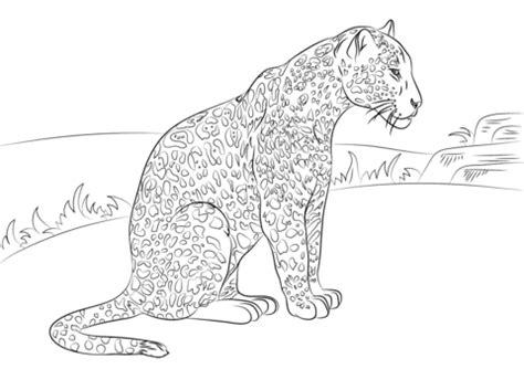 imagenes de jaguar para dibujar faciles dibujo de bello jaguar para colorear dibujos para