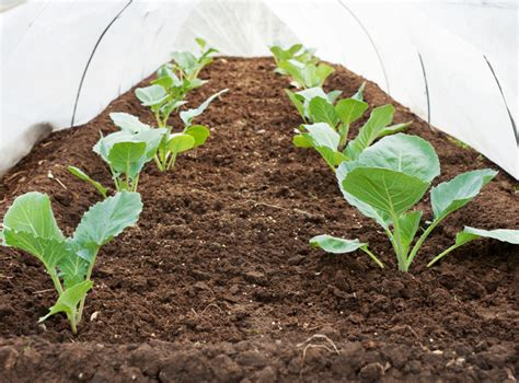 what to plant in vegetable garden now 10 vegetables to plant now for a bountiful harvest