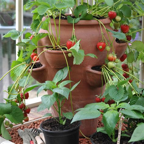 terracotta strawberry planter terracotta strawberry pot home and garden special prices